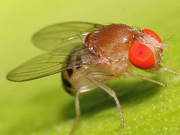 Space and biorhythms of fruit flies